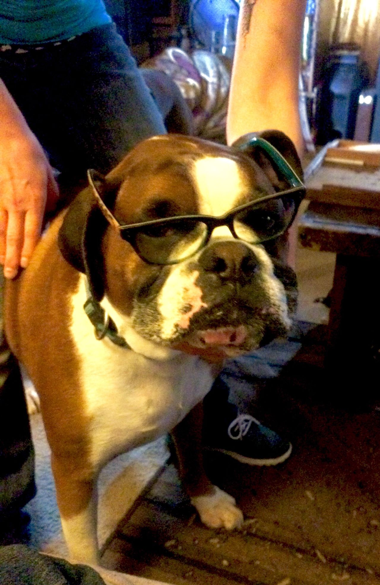 Envision The Future Eyesight Eyes On YOU!! Glasses :) Keeping Watch Boxer Dog Funtime