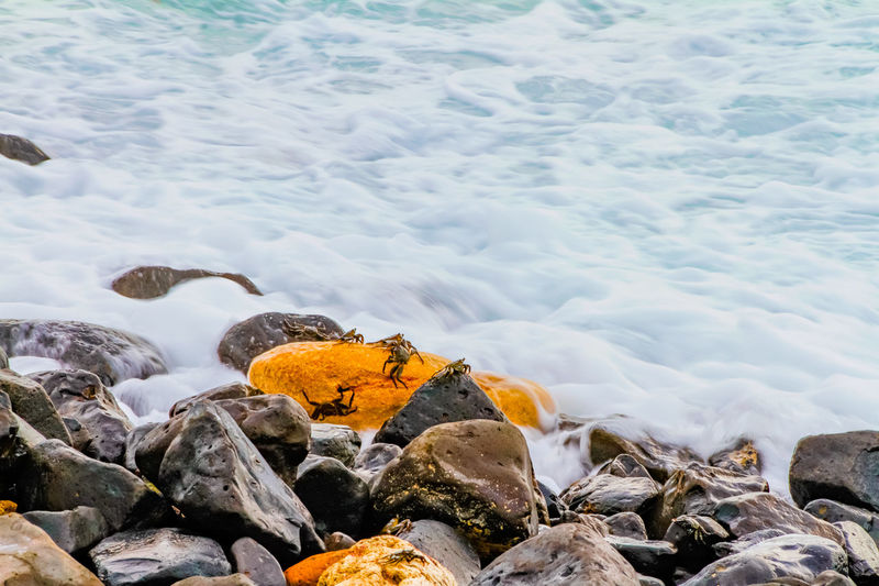 The crab and the waves of the sea Beach Beauty In Nature Crab Day Freshness Ice Large Group Of Objects Nature No People Orange Color Outdoors Scenics Sea Sea View Water Wave Wave Wildlife
