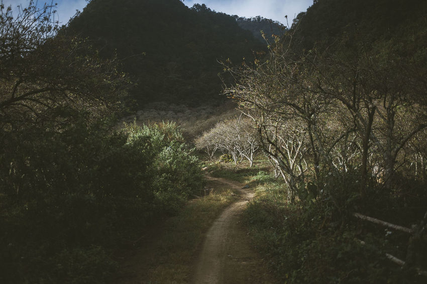 Morning in Moc Chau Adventure Day Discovery Forest Hustle Landscape Light Light And Shadow Mocchau Mocchauvietnam Mountain Mountain View Moutains Mộc Châu Nature New Places Outdoors Travel Trip Viet Nam Vietnam Vietnam Trip Village Miles Away
