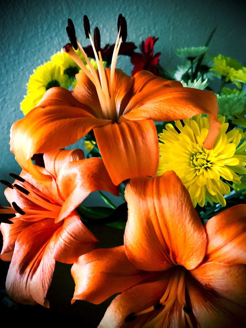 Flower Petal Orange Color Flower Head Nature Beauty In Nature Fragility Freshness No People Blooming Plant Close-up Growth Day Lily Day Outdoors