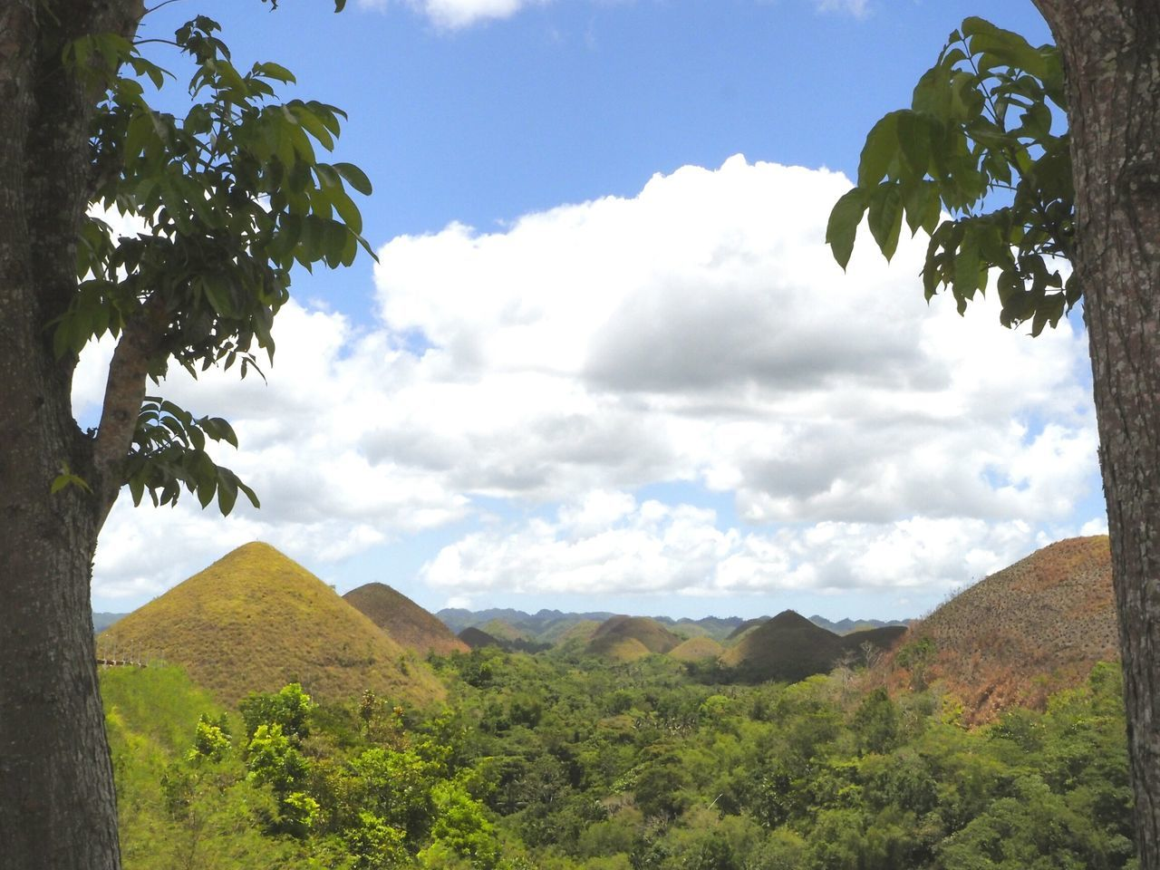 ...chocolate hills... bohol, philippines Bohol Tree Landscape Sky Pinaceae Pine Woodland Beauty In Nature Nature Scenics Mountain Social Issues Leaf Outdoors No People Nature Reserve Day Lush - Description Cloud - Sky Chocolatehills Olympus Beauty In Nature Nature Green Color Green Green Green Green!