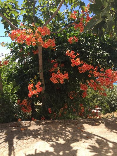 Flowers Red Calabria IPhoneography