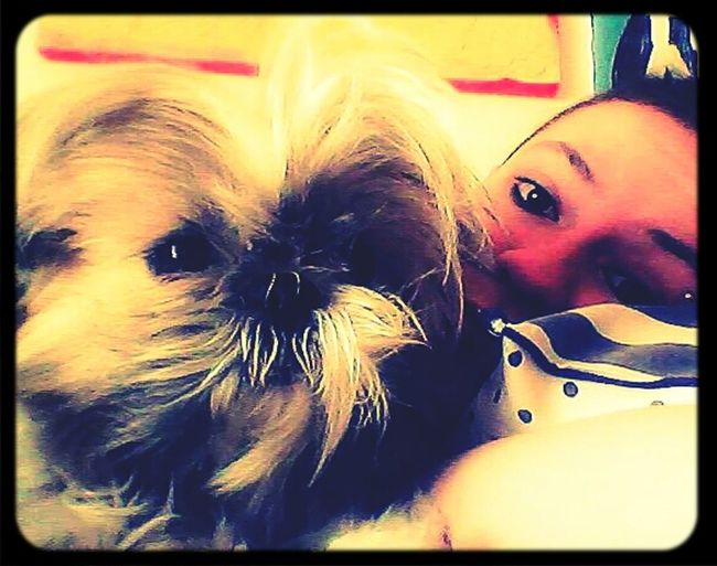 Animal Love Ilovemydog DogLove Cleo&me Goodmorning Animal_collection Hi!
