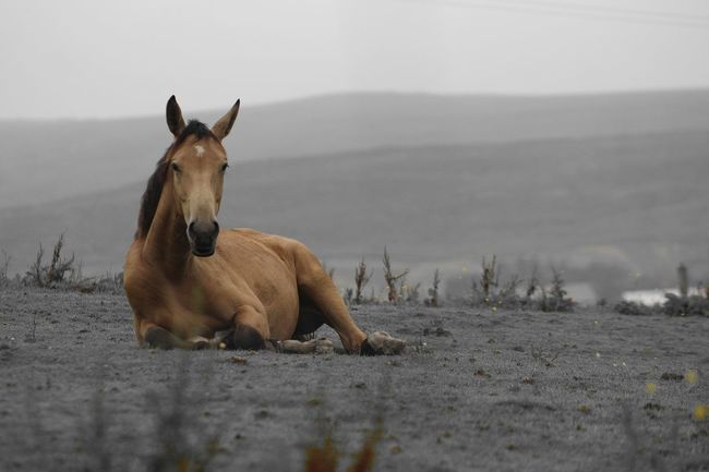 Beautiful Horse Brown Horse Relaxing Horse Check This Out Enjoying Life Lancashire Good Morning Hanging Out Nature