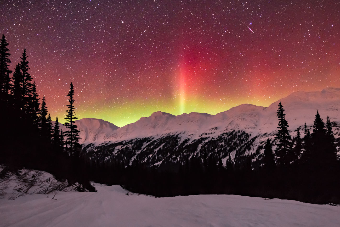 A rare 'blood' aurora fills the sky across the Northern Rockies. Taken just this past weekend, red or 'blood' aurora's are created by oxygen atoms at an altitude of between 200–500 km (120-300miles) colliding in a high energy state and emitting red light at 630 nm. In contrast the more common green aurora are oxygen atoms at a lower altitude of 70-200km (40-120 miles) and lower energy state emitting light at 557.7 nm. In most cases to see a red aurora you need an extremely dark sky and to be looking from a lower latitude across the top layers of a distant high latitude aurora. When the aurora is closer or overhead, the subtle high altitude red fringe is drowned out by the intensity of the lower altitude green aurora. In this shot the green aurora is also visible spilling over the mountains however it has taken a more yellow hue as it's mixed with the light of the red aurora from behind it. If you look at the high resolution version of this shot you can see 7 shooting stars in the time it took for this 20 second exposure, although 6 of them are quite faint. The shot was taken at a latitude of 55 North looking across the rugged Hart Ranges of the Northern Rocky Mountains which form part of the Pine Le Moray Provincial Park. British Columbia, Canada Love Life, Love Photography Aurora Aurora Borealis BC, Canada British Columbia Cold Temperature Constellation Illuminated Landscape Mountain Mountain Range Pine Pass Nature Night No People Outdoors Purity Sky Snow Space Star - Space Tree Wilderness Winter Canadian Rockies  Northern Lights The Great Outdoors