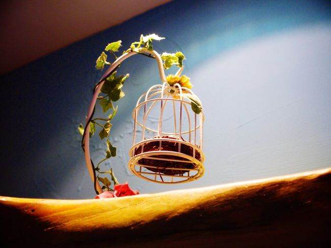 Busan Interior Design Diy Item Taking Photos Olympus E-P3 14-54mm II From My Point Of View Traveling Bird Cage Beautiful
