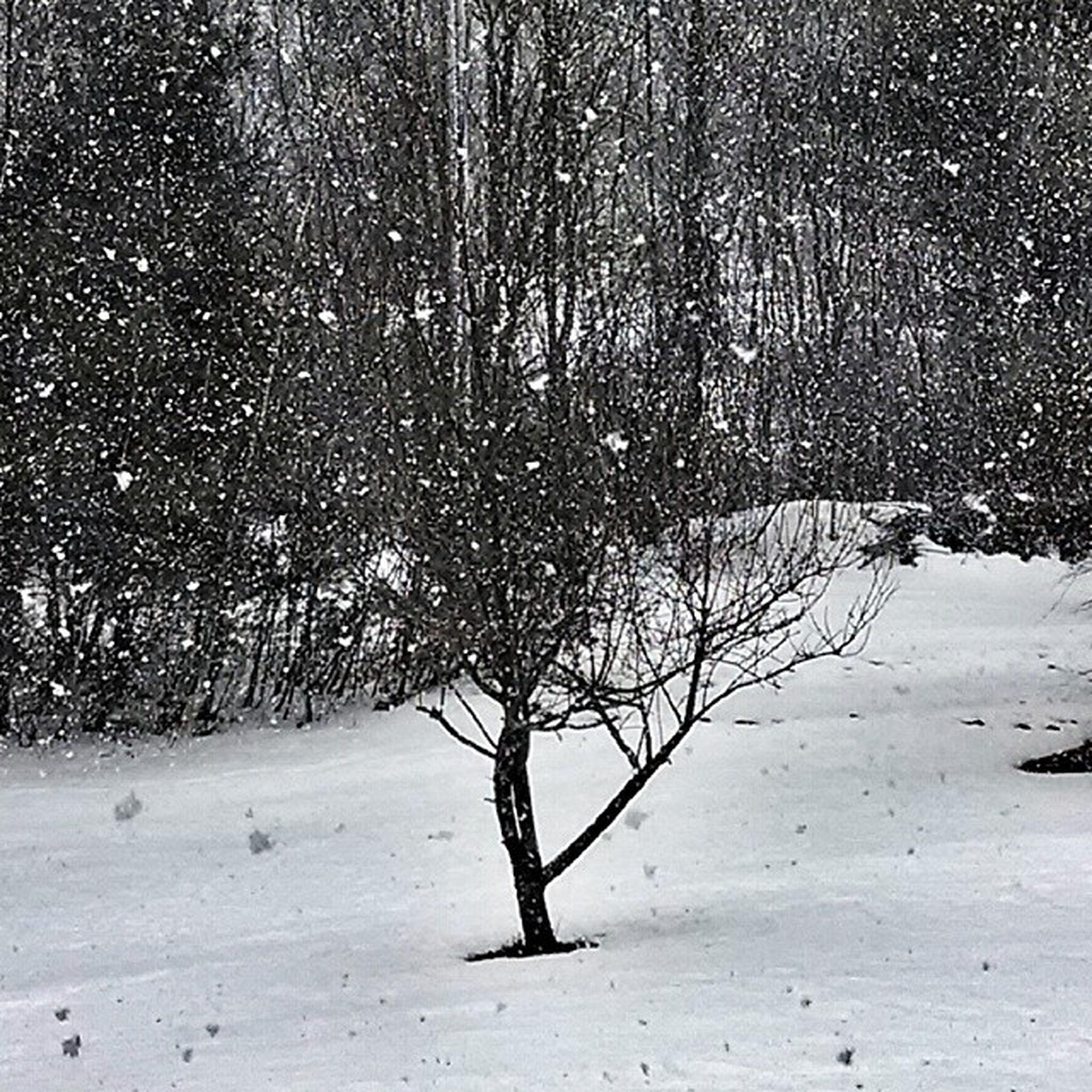 Snowing!