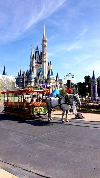 Orlando Florida Traveling Enjoying Life Taking Photos DisneyWorld