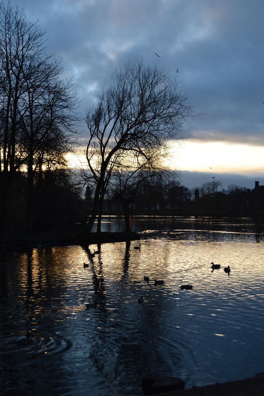 Beauty In Nature Ducks Dusk Nature Overcast Reflection Rippled Sky Sunset Walsall Walsall Arboretum Walsallarboretum Water
