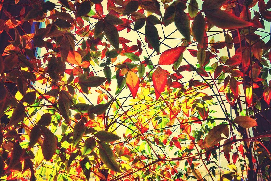 Korea Photos Autumn Colors Fall Beauty Treepark Colors Of Atumn Autumn Leaves EyeEm Nature Lover