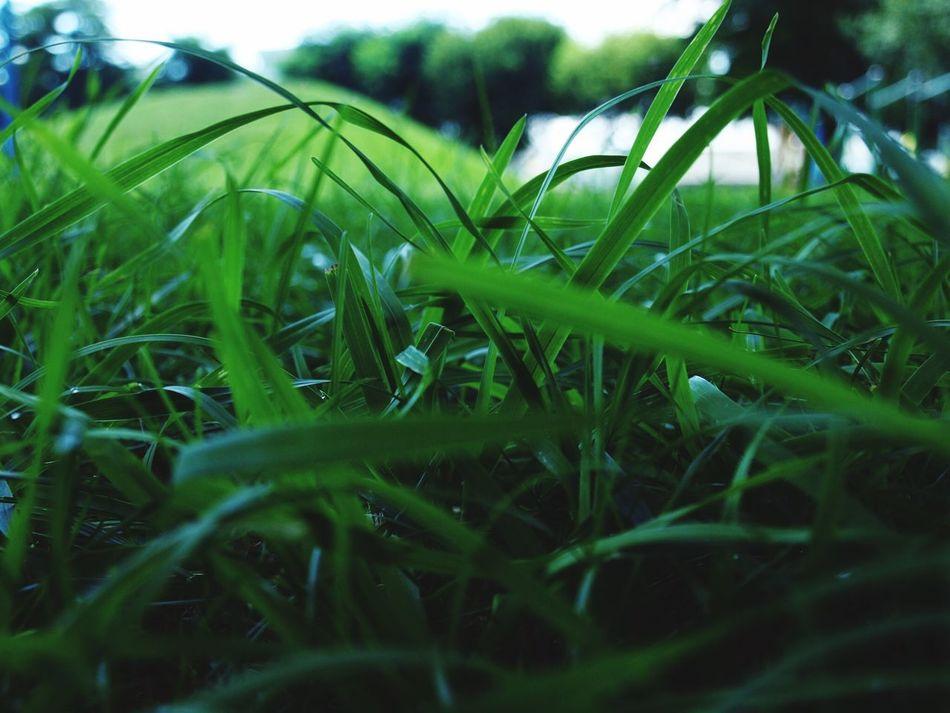 ฅ(๑•̀ω•́๑)ฅニャンニャンガオー★ 夏草 緑 Green Taking Photos EyeEm Nature Lover Olimpus