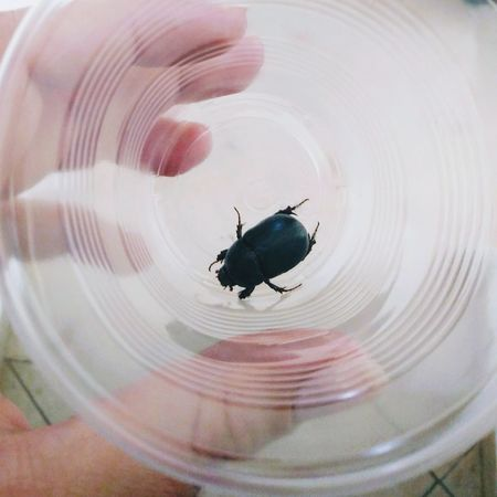 Beetle Insect One Animal Animal Themes Animal Wildlife Animals In The Wild Close-up No People