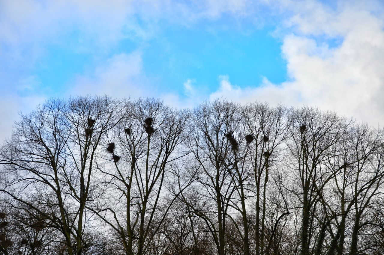 Nature Beauty In Nature Outdoors Day Tree No People Crow Crowded From My Point Of View StillLifePhotography Eyeemphotography Outdoorphotography Outdoor Beauty Trees_collection Trees And Nature Art Photography