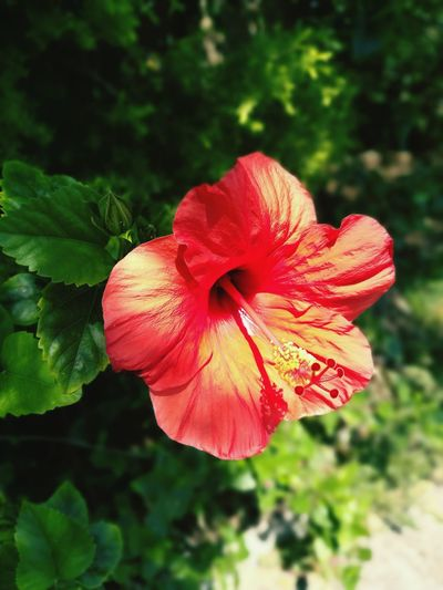 Flower Nature Red Plant Growth Beauty In Nature Pink Color Flower Head Close-up Outdoors Day Petal Bush