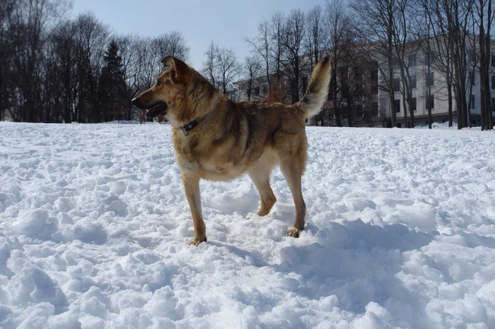 Threelegs Dog Disabled Disability Not Inability Winter White Snow