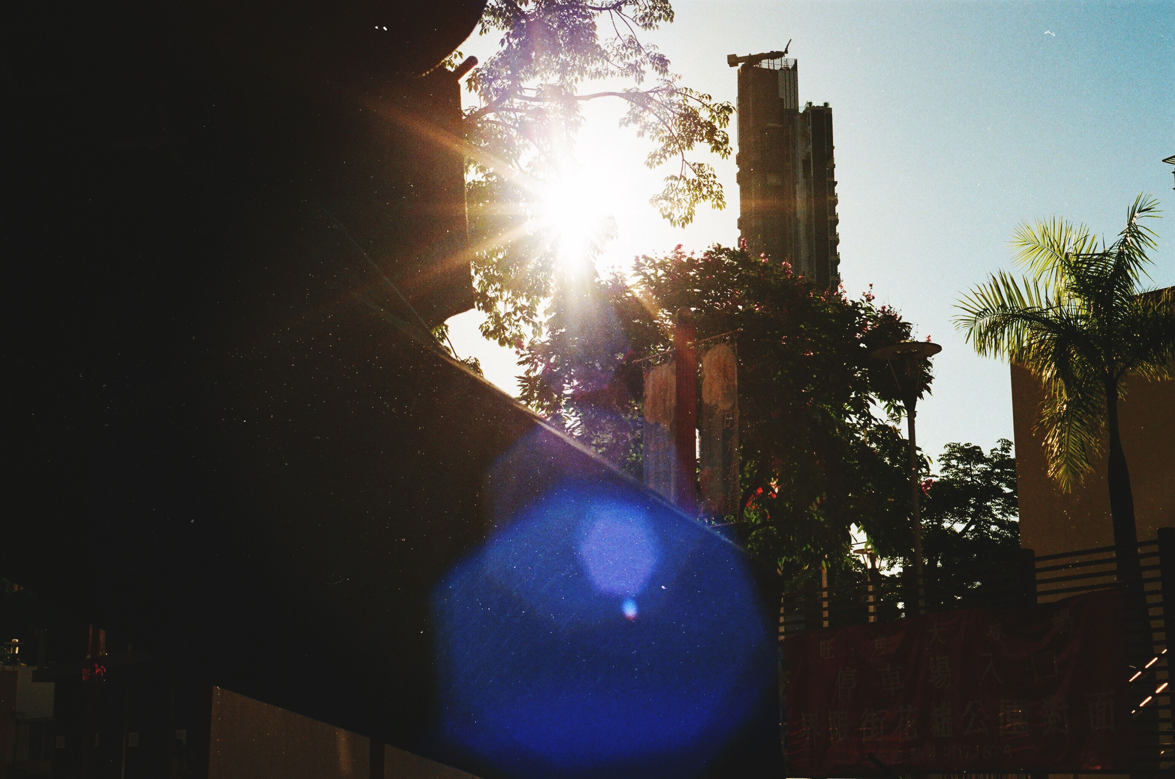 built structure, architecture, building exterior, sun, sunlight, low angle view, lens flare, sunbeam, clear sky, reflection, tree, blue, building, sunny, bright, sky, no people, outdoors, city, street light