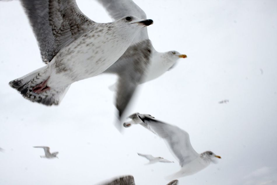Animal Themes Cold Temperature Day Flock Of Birds Flock Of Seagulls Nature No People Outdoors Seagulls Snow Weather White Color Winter