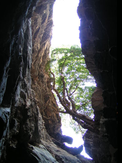"""National Park """"Grutas de Cacahuamilpa"""" Caverns Mexico Tree Beauty In Nature Caves Grottoes Light And Shadow Nature Rocks Stalactites Travel Destinations"""