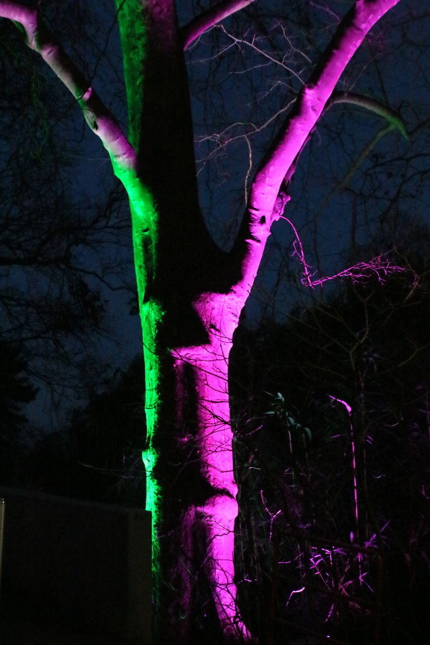 night, tree, tree trunk, no people, growth, nature, outdoors, branch, leaf, illuminated, beauty in nature, close-up