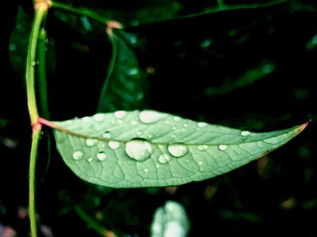 Selective Focus Drop Droplets Leaf After Rain