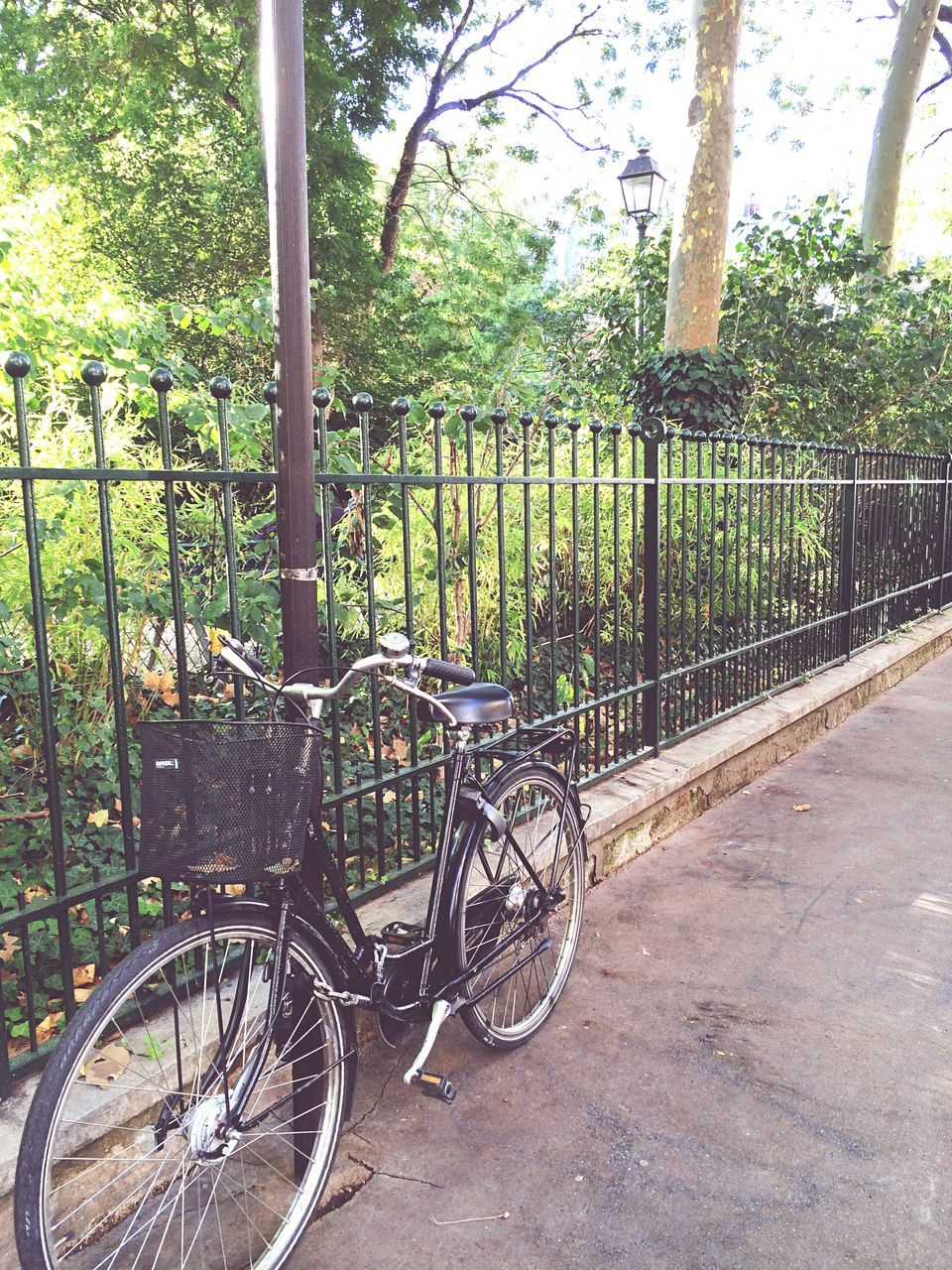 bicycle, transportation, mode of transport, stationary, day, tree, no people, land vehicle, growth, outdoors, bicycle rack, nature