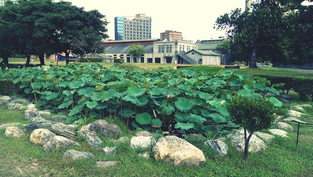 走個幾步路天氣就不一樣 Flower Collection Lotus Flower Bad Weather
