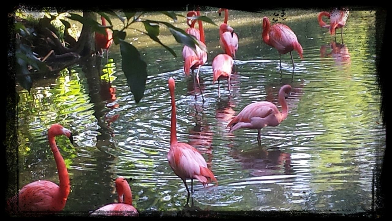 Flamingos at the Jacksonville Zoo and Gardens Flamingos Zoo Jacksonville Zoo Jacksonville Florida The 00 Mission
