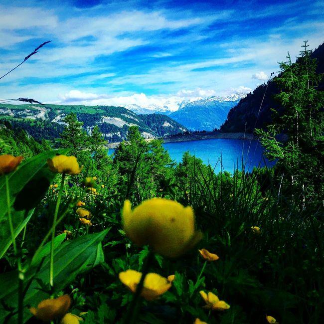 Lac De Tseuzier Valais Switzerland Swiss Alps Lake Mountains Snow Water Flower Schweiz Schweizer Alpen Stausee Sky Cloud Beauty In Nature Calm Mountain Yellow