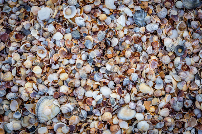 Ornament Abundance Backgrounds Beach Close-up Cockleshell Day Full Frame Large Group Of Objects Nature No People Outdoors Pebble Pebble Beach Seashell