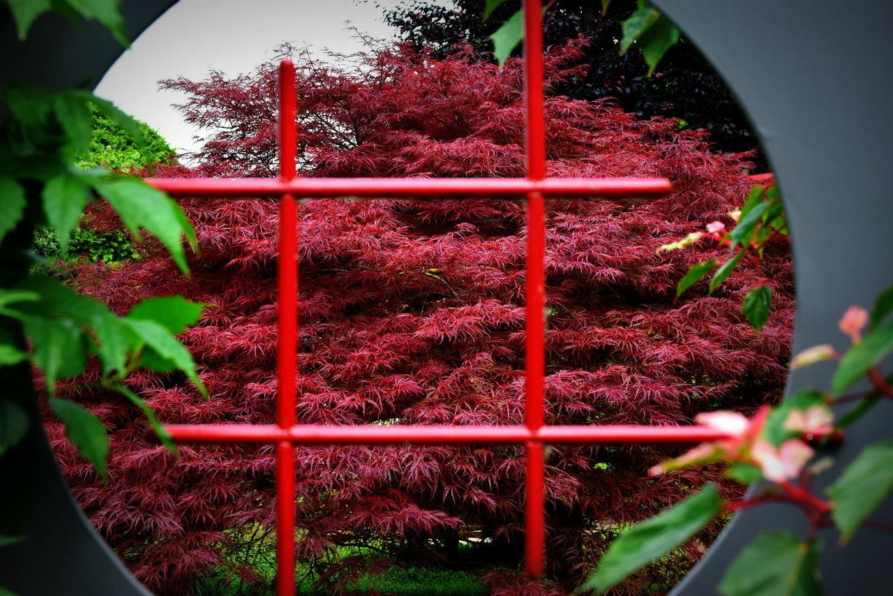 Zen garden Beauty In Nature Close-up Day Flower Freshness Growth Nature No People Outdoors Plant Red Zen Garden