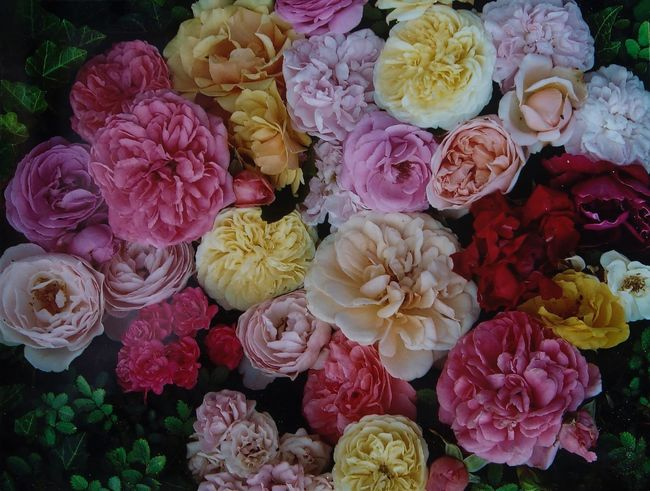 6x7cm 120-film Diascan Reproduction Rollfilm Beauty In Nature Bouquet Close-up Day Farbenfroh Florist Flower Flower Head Flower Market Flower Shop Fragility Freshness Indoors  Nature No People Peony  Petal Pink Color Rose - Flower Rosenblüten Variation