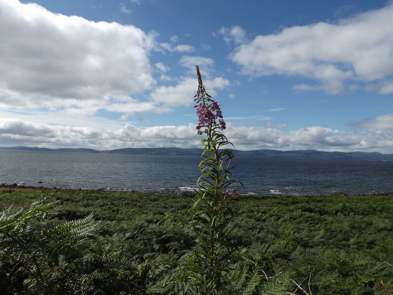 Alone Arran  Beauty In Nature Cloud - Sky Day Flower Grass Horizon Over Water Isle Of Arran  Nature Nature No People Outdoors Plant Protection Scotland Sea Sky Trip Water Wild Flower