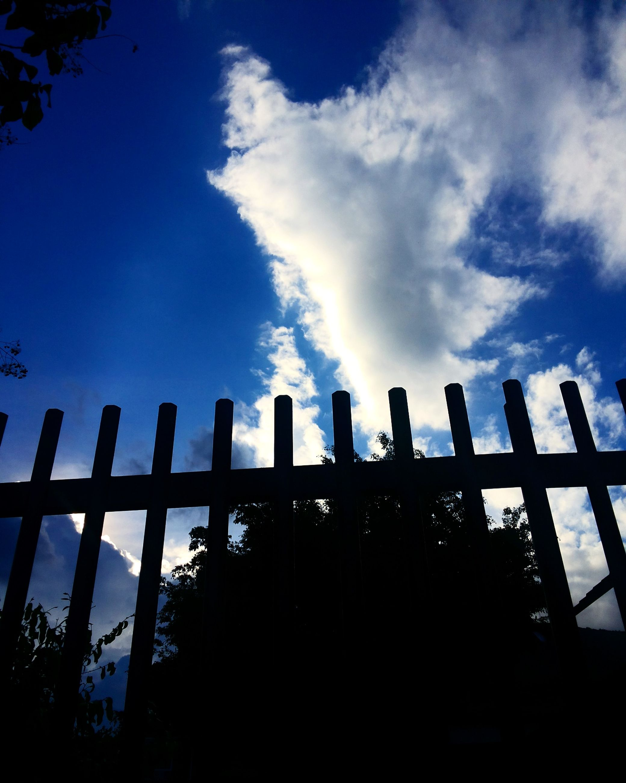 low angle view, silhouette, sky, blue, fence, tranquility, cloud - sky, day, scenics, nature, outdoors, growth, beauty in nature, tranquil scene