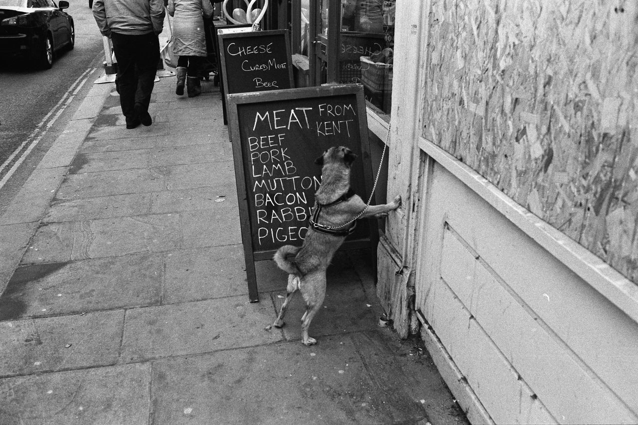 Meat from Kent with Norfolk Terry Abandoned Animal Animal Themes Brown Day Destruction Domestic Animals Full Length Mammal Meat From Kent Animals Eat Eating Dog Standing Sign Shop Bark Barking Standing On Back Legs Begging Hungry Soho London Street Documentary Reportage Taking Photos Photo Black & White Film Soho Londonstreet Perspective Dog Hair Lead Doggies Narrow Occupation One Animal Ruined Side View Sitting Two Animals Wood Wood - Material Wooden Zoology