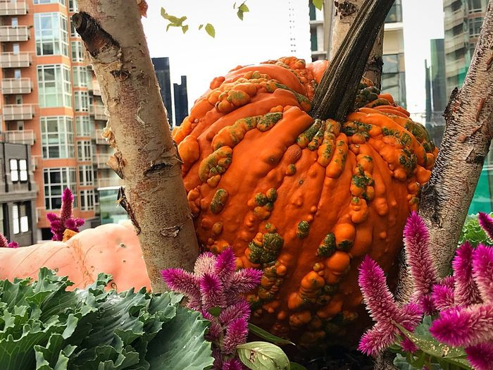 Freshness Vegetable Food Building Exterior Healthy Eating Market Day Outdoors Food And Drink Architecture City No People Close-up Punmpkin Halloween Pink Color Bloomberg Building New York City