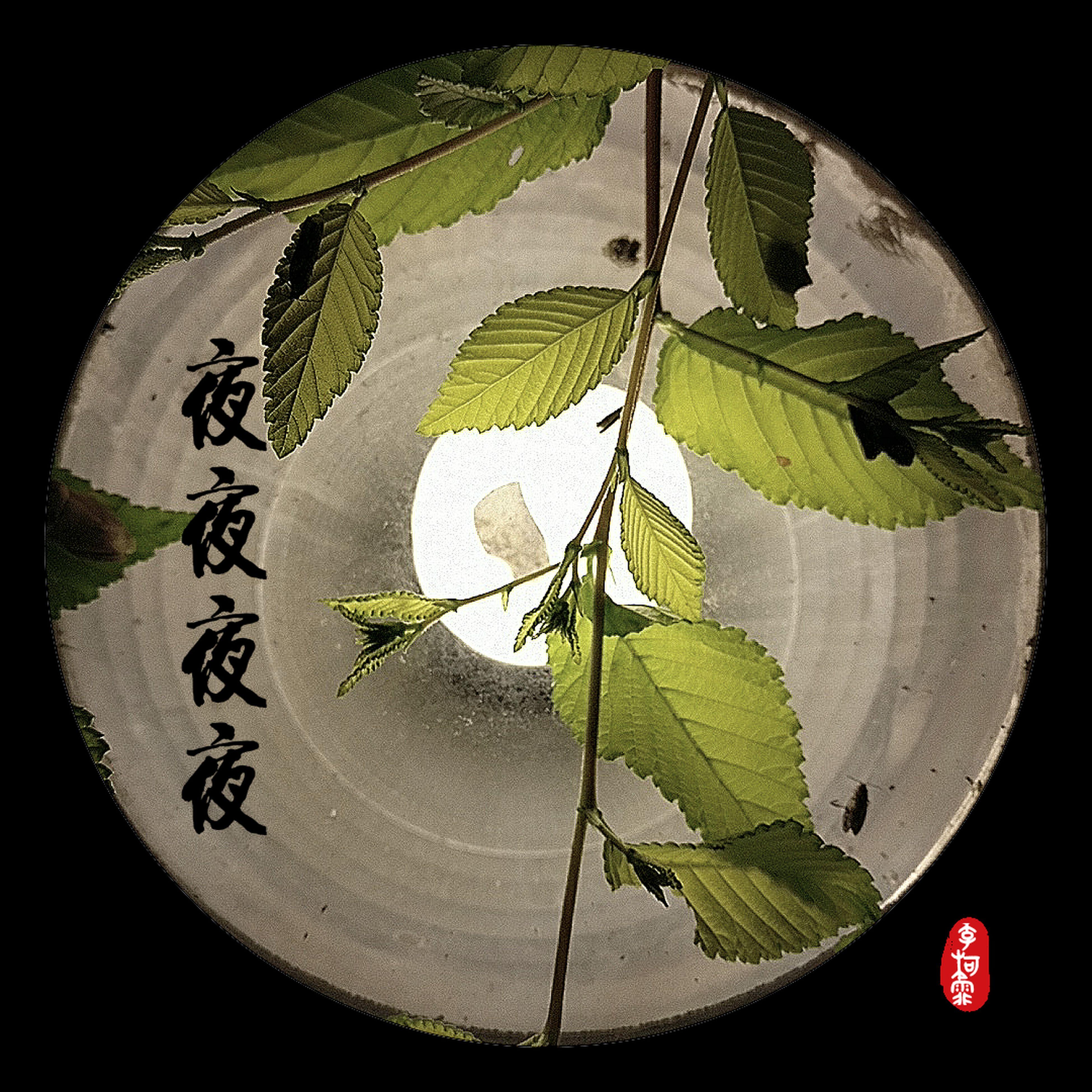 leaf, green color, plant, close-up, black background, green tea, no people, studio shot, indoors, nature, freshness, day