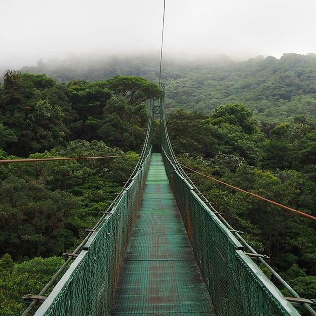 Walking above the Cloud Forest in Monteverde on hanging bridges was a brilliant experience, very peaceful. _____________________________________ CloudForest Forest Rainforest Ancient Ancientforest Monteverde Monteverdecloudforest HangingBridge Costarica Gadventures Travel Travelworld Wanderlust Olympus Instatravel