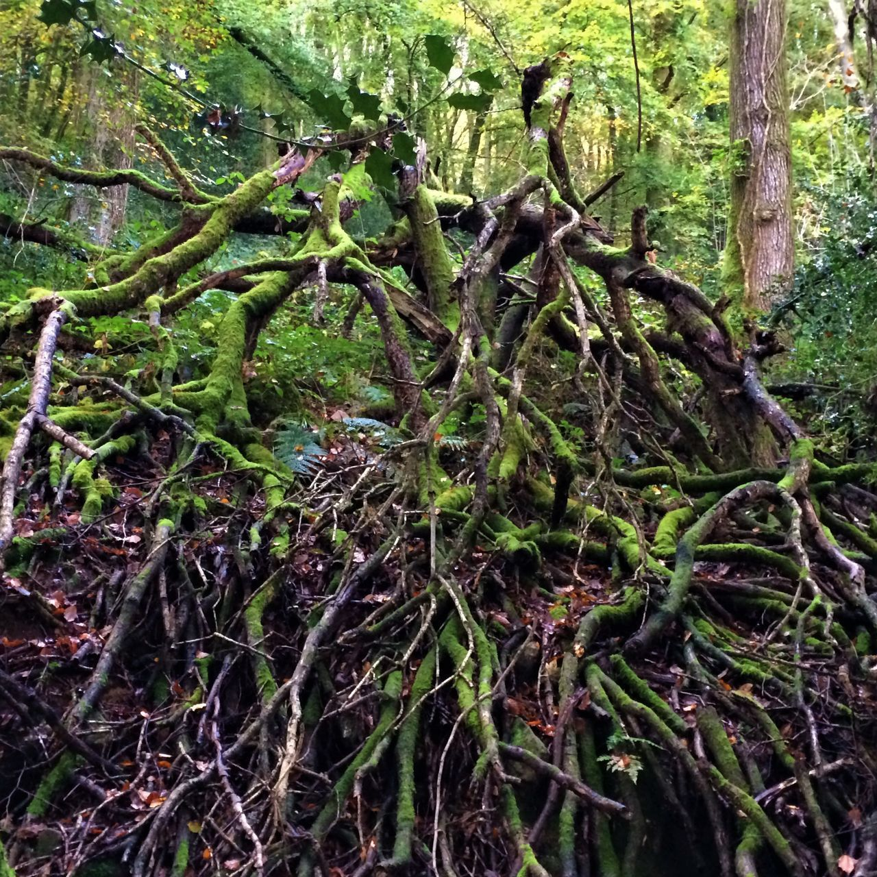 Beauty In Nature Branch Broken Tree Close-up Day Forest Green Color Growth Moss Nature No People Outdoors Tranquility Tree