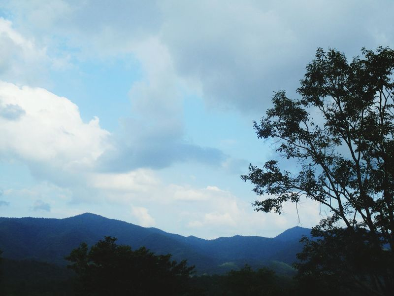 Tree Mountain Nature Forest Sky Cloud - Sky No People Outdoors Day Beauty In Nature
