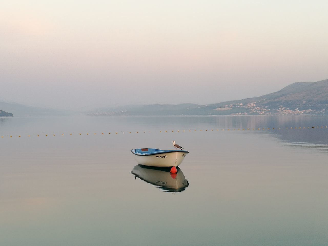 My Year My View Sea Boat Morning Seagull Beauty In Nature Foggy Morning Morning View Landscape