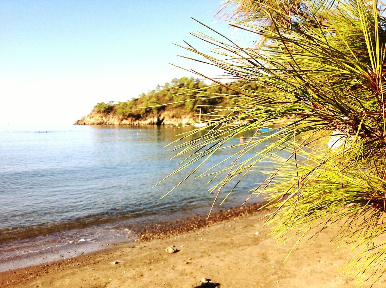 sea, tranquil scene, nature, beach, tranquility, water, scenics, no people, sand, beauty in nature, outdoors, day, clear sky, tree, sky