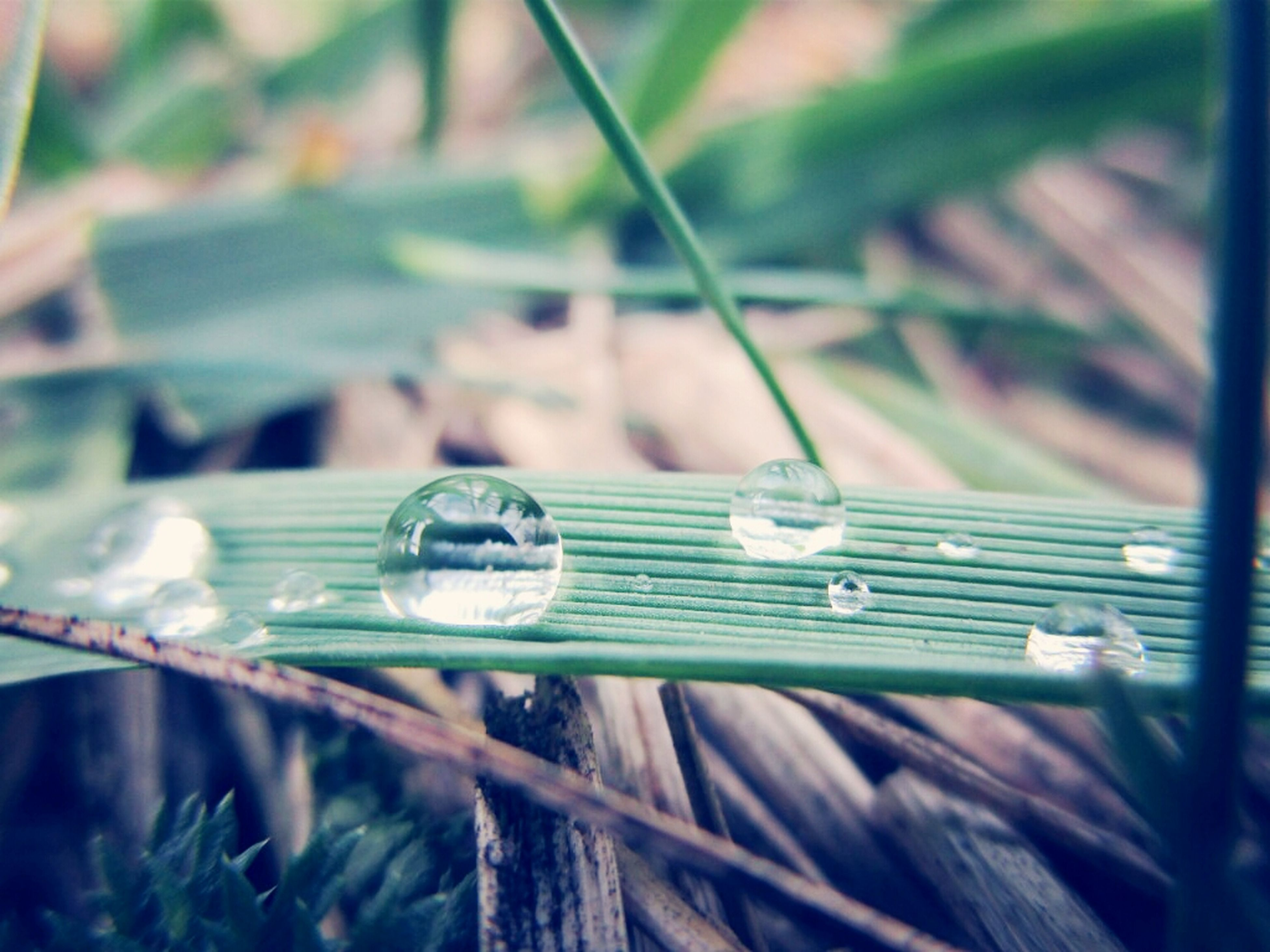 close-up, selective focus, focus on foreground, wood - material, day, green color, no people, outdoors, wooden, metal, nature, insect, rusty, blade of grass, old, water, wood, abandoned, grass, one animal