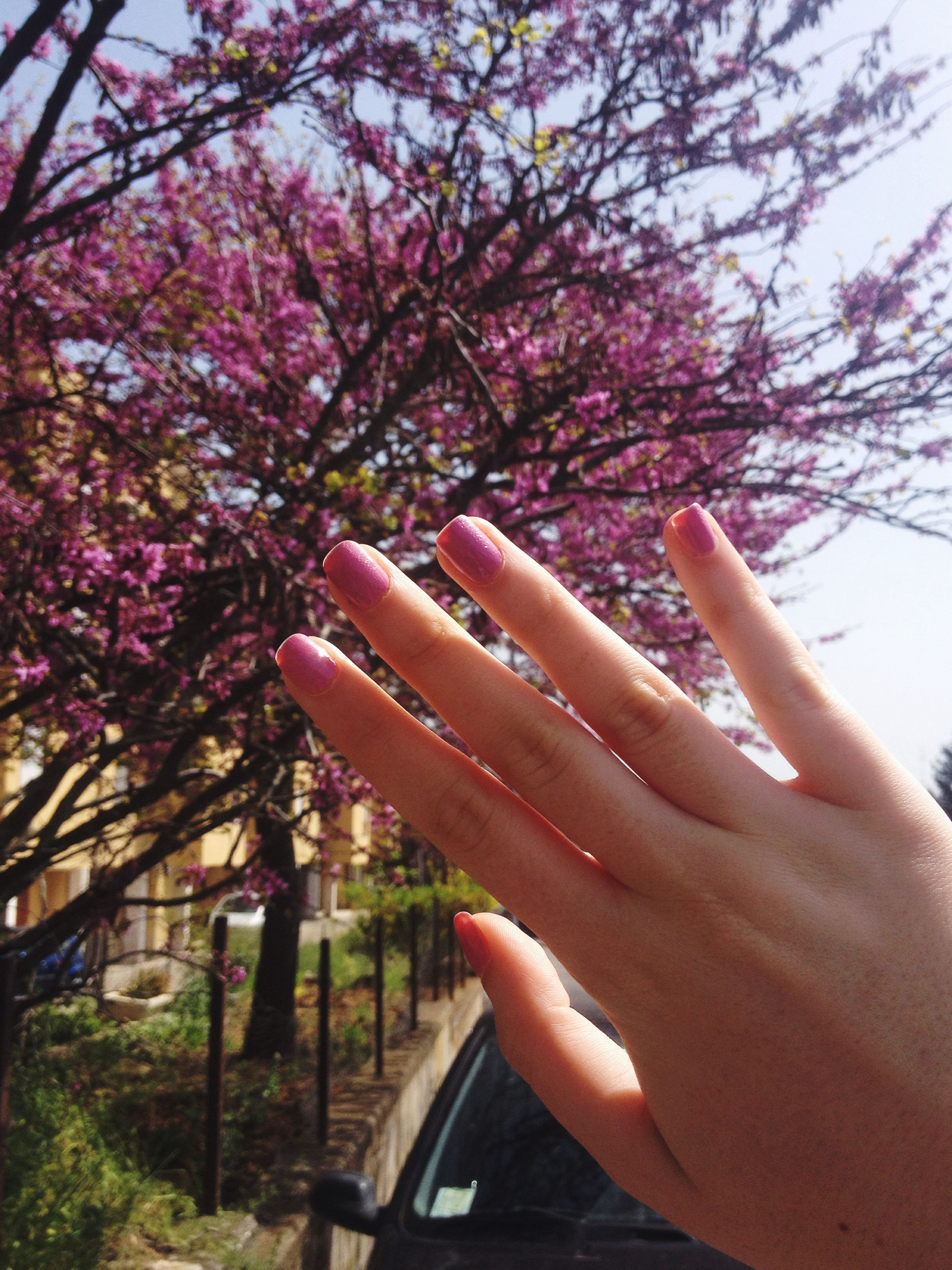 person, holding, part of, tree, cropped, flower, lifestyles, human finger, leisure activity, personal perspective, unrecognizable person, freshness, growth, day, outdoors, close-up