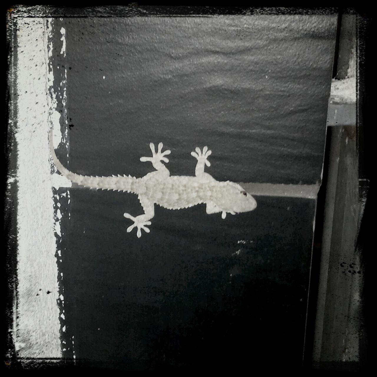 Nature Reptil Salamander Ibiza