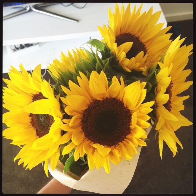 Sunflowers 🌻🌻🌻🌻 Sunflowers🌻 Flowers Birthdaypresent Pretty Simplylovely👌🏻