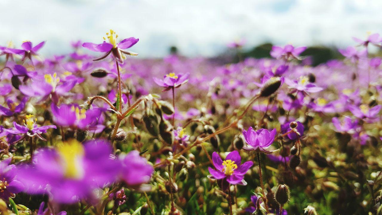 Somehow Focused Flowers at Alentejo Portugal to EyeEm Nature Lover EyeEm Best Shots & Eye4photography