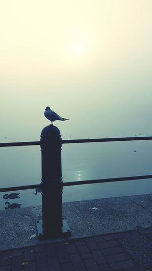 Foggy freezing morning on the quays Animal Wildlife Animals In The Wild Reflection One Animal Bird Nature Animal Themes Social Issues Outdoors Lake Perching No People Tranquility Night Songbird  Sky Water Foggy Foggy Morning