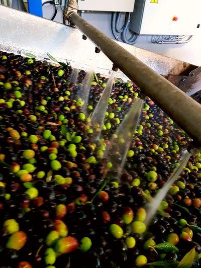Fruit No People Food Olioextravergine Olioextraverginediolivabiologico Oliva Olive Frantoio Frantoio Olive Oil Olioextraverginedioliva Olioextraverginedolivabiologico OlioNuovo