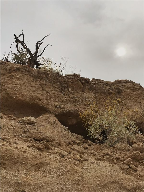 Nature Sky Landscape Day Beauty In Nature Outdoors Tranquility Tranquil Scene No People Scenics Arid Climate Bare Tree Tree Desert Mountain Plant Dead Tree Low Angle View Sand Dune Sage Rock Formation Physical Geography Desert Flora Sand Dry Wash