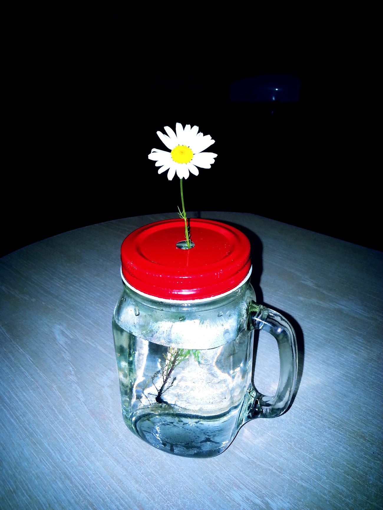 Miracle Of Life Flower, Rebirth First Eyeem Photo Life Extraordinary  LiveYourLife Breath Marguerite Flower Believe